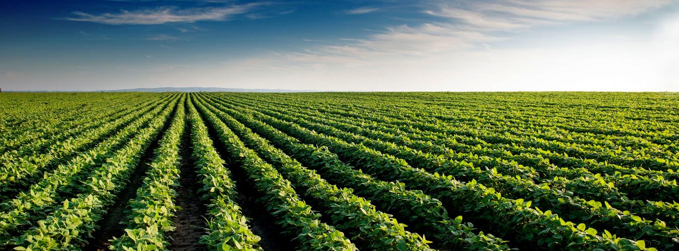 banner2-agrologic
